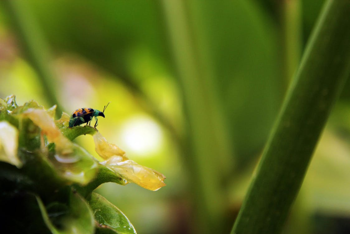 bitxo, inseto, natural