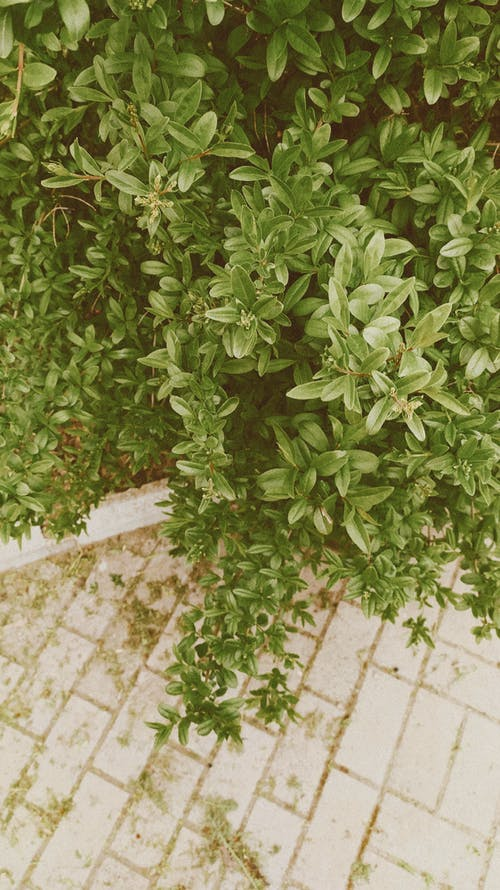 From above abundant lush shrub growing near paved walkway on street in daylight