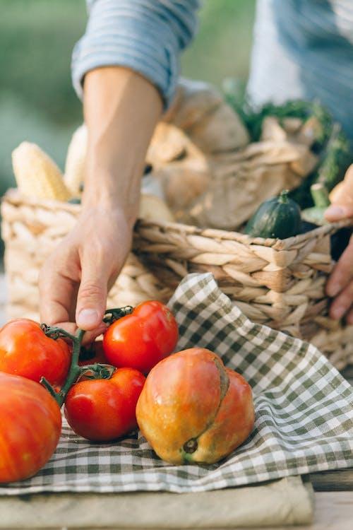Foto d'estoc gratuïta de a l'aire lliure, adult, agrícola