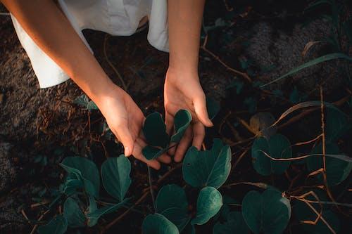 Immagine gratuita di adulto, albero, arte, colore