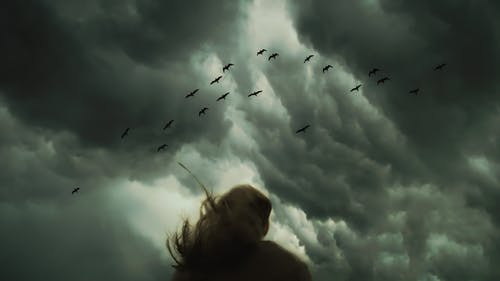 Woman Looking at Birds Flying