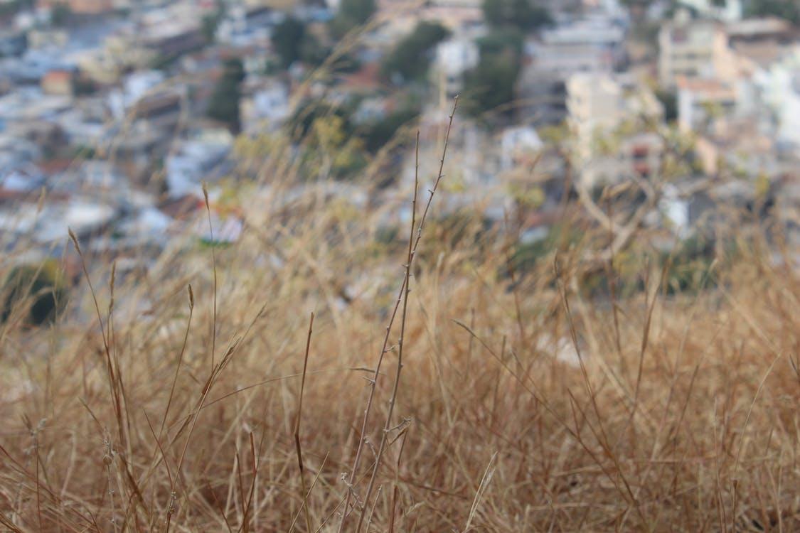 Fotobanka sbezplatnými fotkami na tému tráva