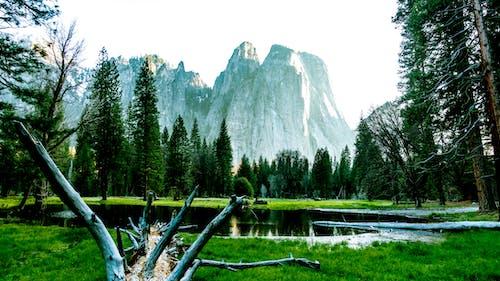 Бесплатное стоковое фото с деревья, дымка, живописный, идиллический