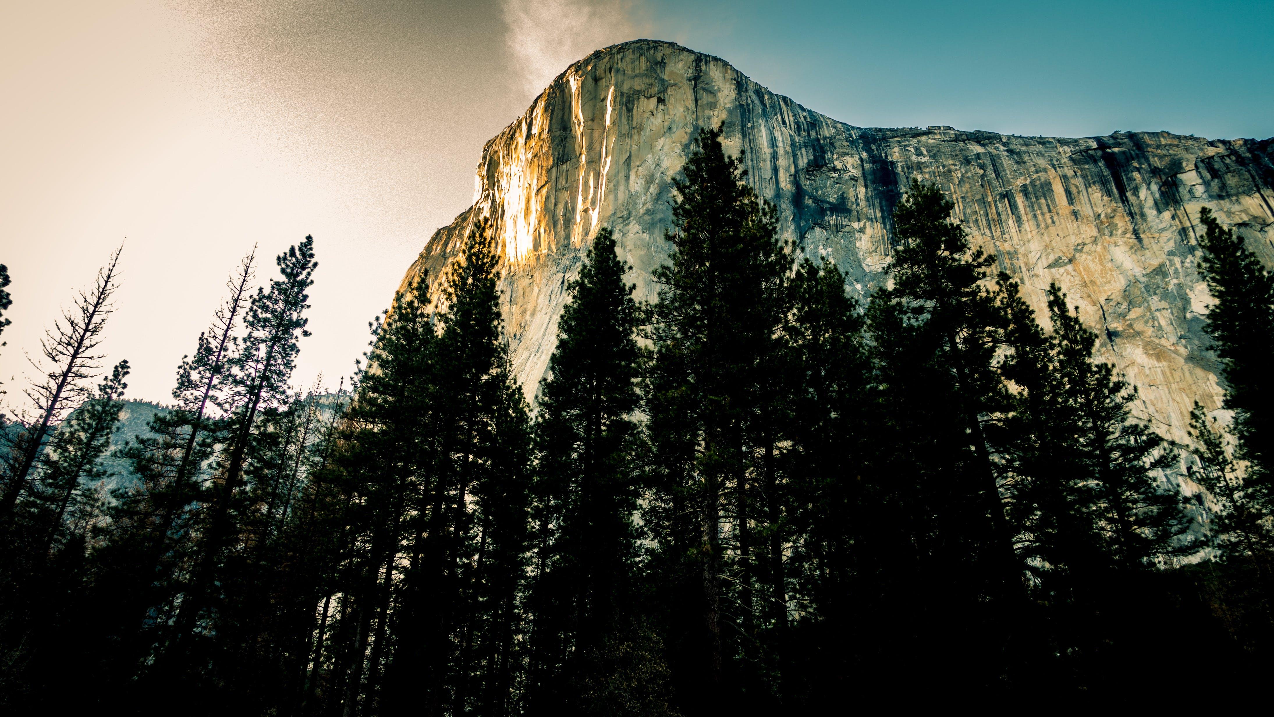 Pine Trees Near Mountain