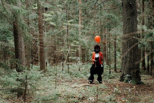 Foto d'estoc gratuïta de a l'aire lliure, adult, arbre, arbres