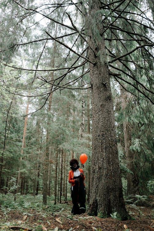 Foto d'estoc gratuïta de a l'aire lliure, arbre, arbres, bagul