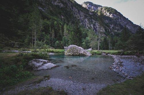 Imagine de stoc gratuită din apă, apă curgătoare, arbore