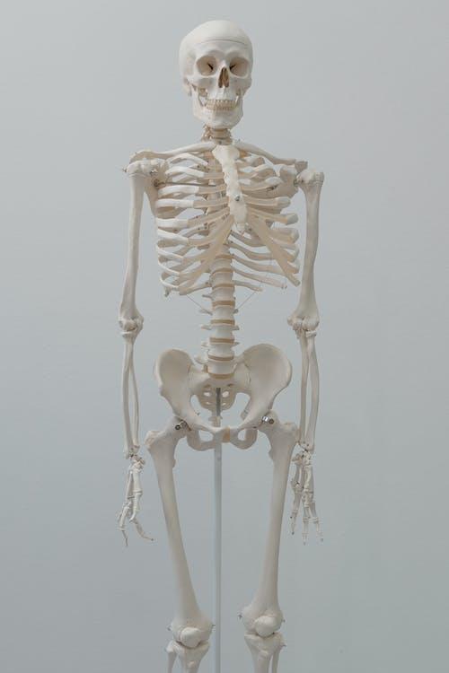 Бесплатное стоковое фото с Анатомия, аудитория, Биология