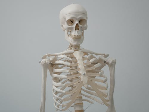 Foto profissional grátis de abstrato, anatomia, arrepiante