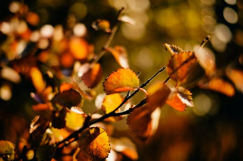 Free stock photo of autumn color