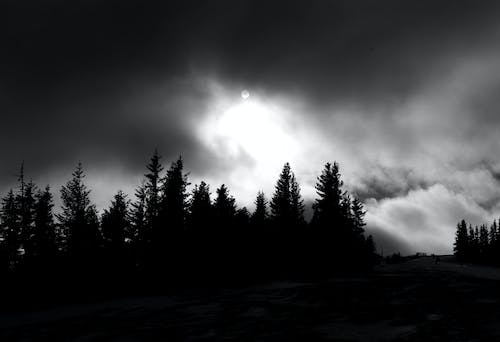 Free stock photo of black and white, black forest, cloud forest