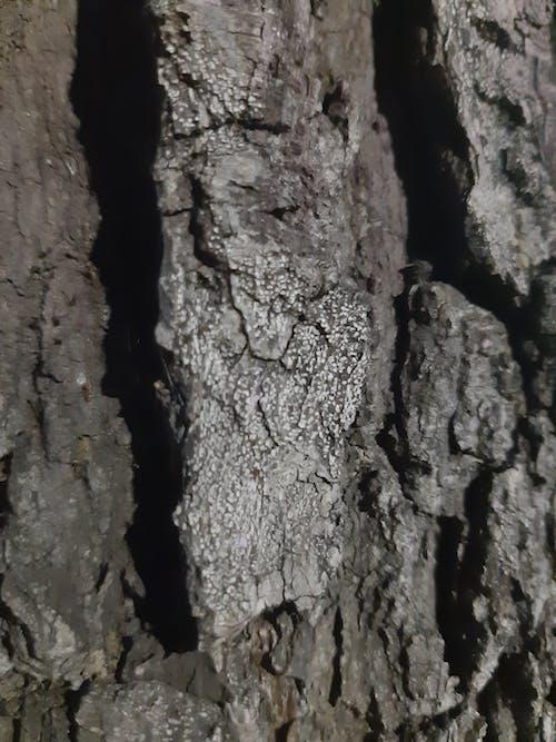 Free stock photo of cortex, tree, tree bark