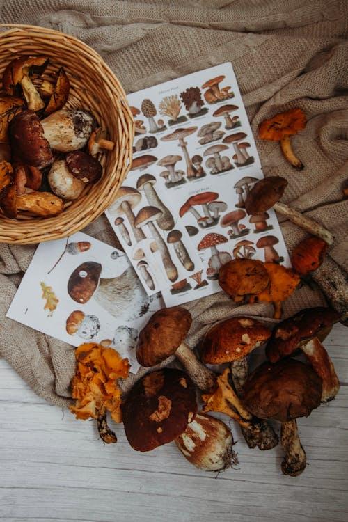 Základová fotografie zdarma na téma dřevo, houby, hřib