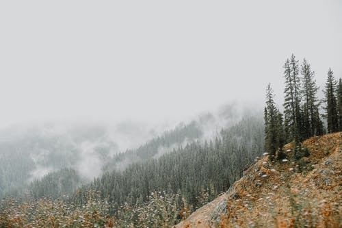 Mountains with coniferous trees under foggy sky