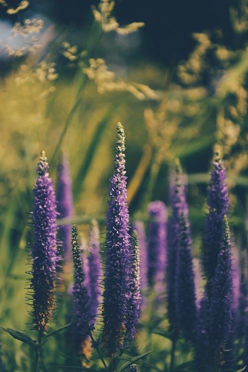 Бесплатное стоковое фото с дневной свет, лето, лист