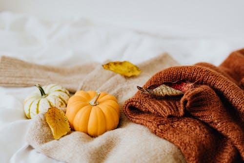 Gratis lagerfoto af bage, bagning, efterår