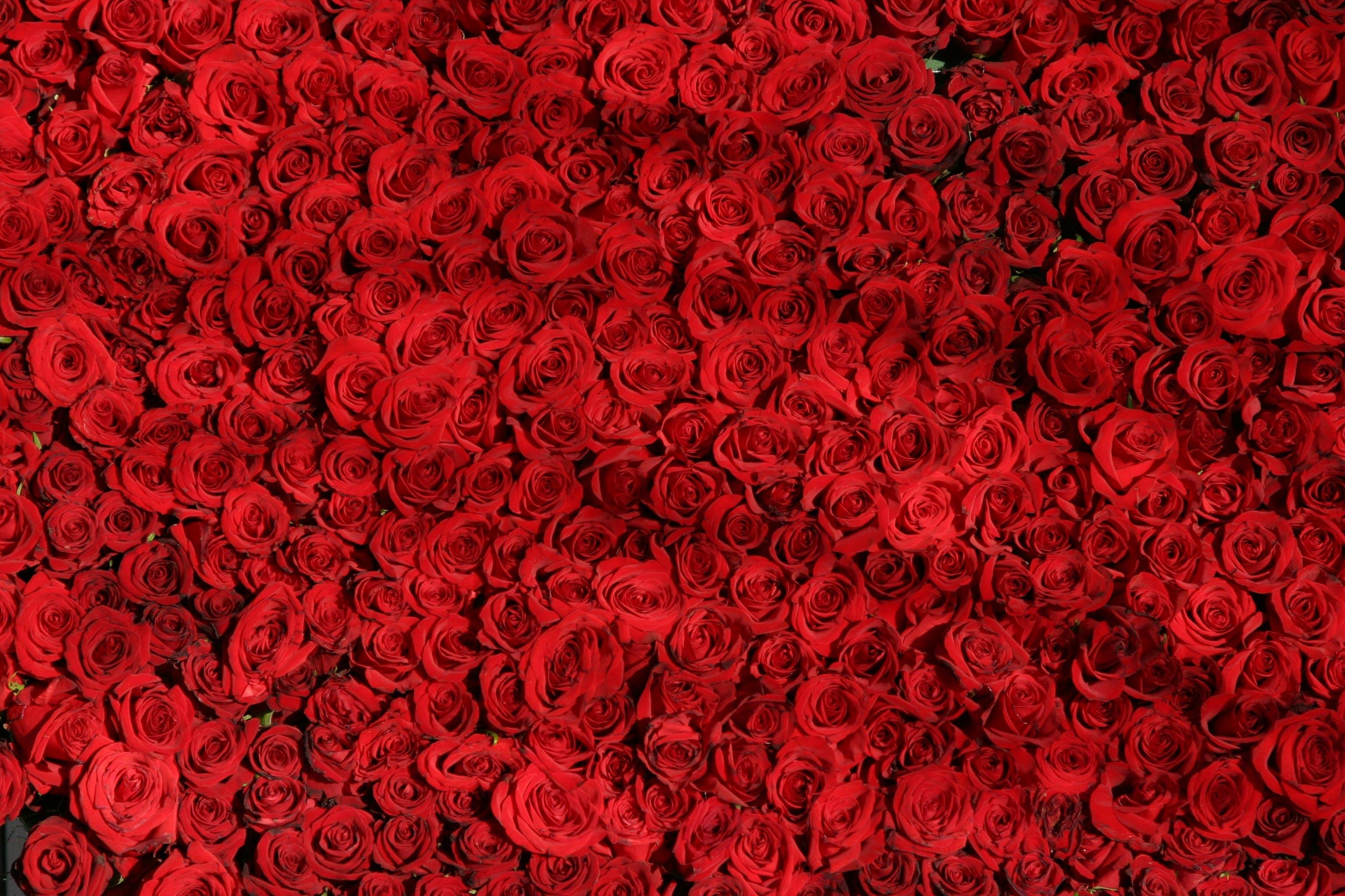 arranged, flowers, love