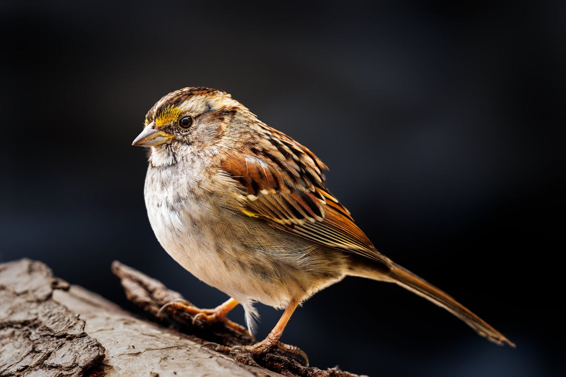 Adorable sparrow standing on tree trunk
