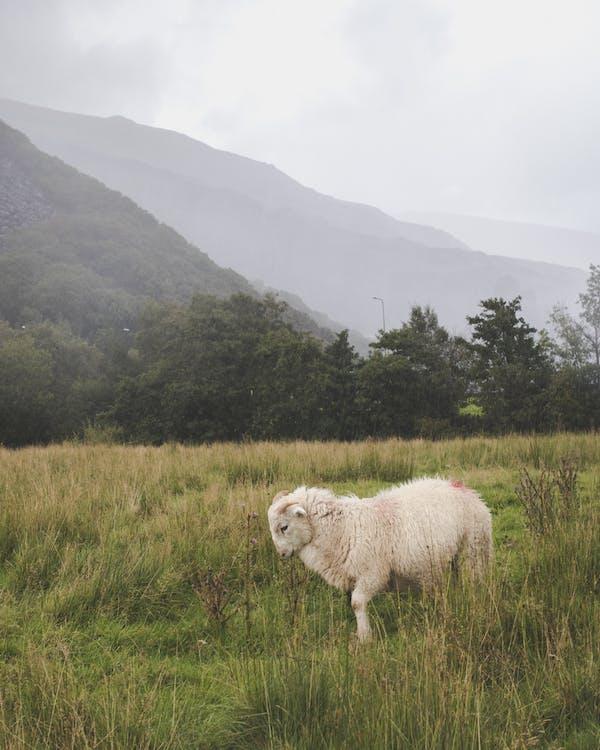 가축, 건초지, 경치의 무료 스톡 사진