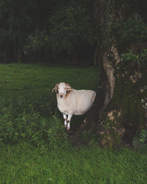 Ilmainen kuvapankkikuva tunnisteilla eläimet, heinäpelto, karja, kenttä
