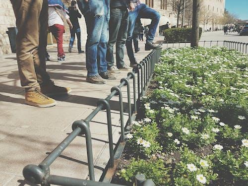 Ảnh lưu trữ miễn phí về bạn bè, đường phố, hoa, mặc