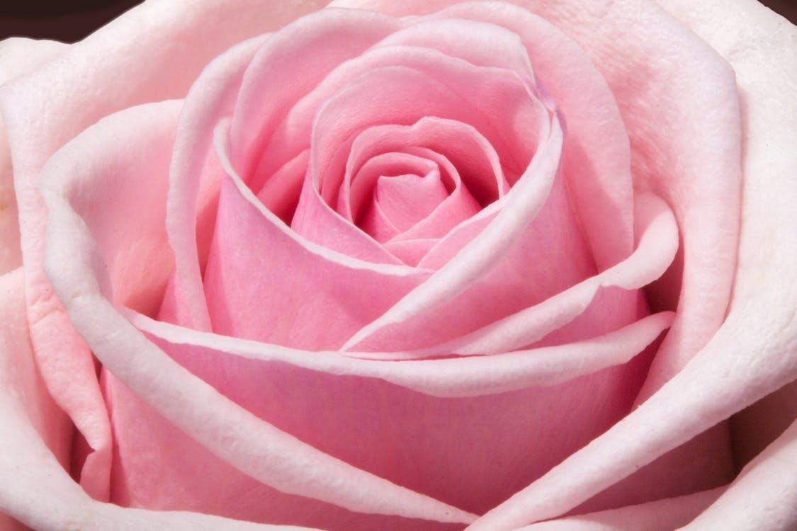 dekorativní, flóra, kvést