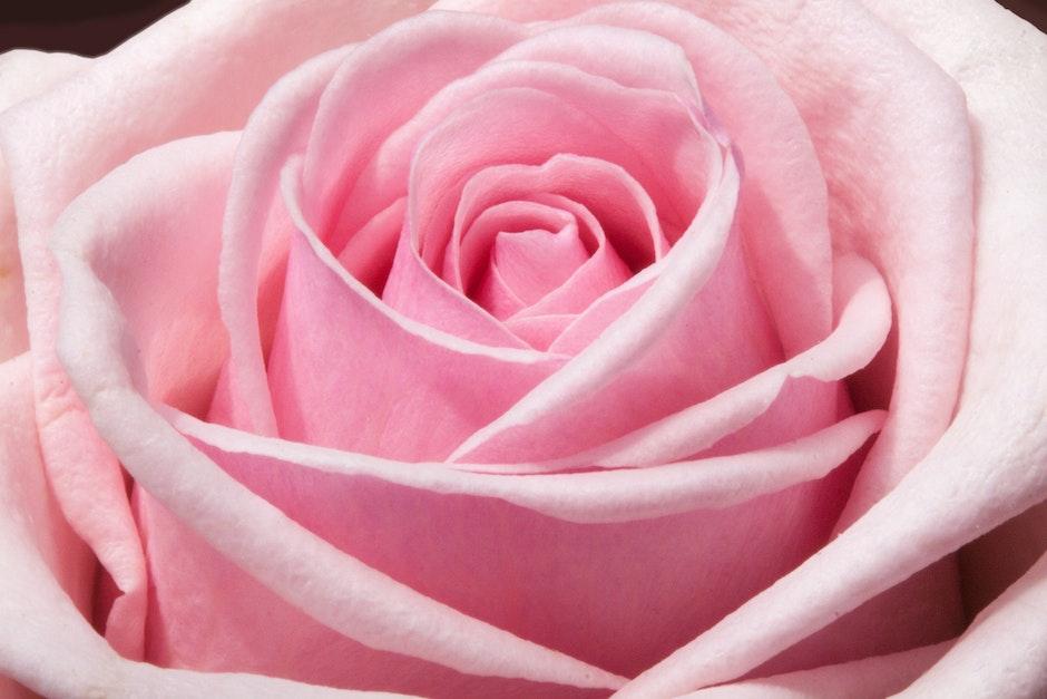 احلى ورود 2017, زهور منوعة اجمل ملونة 2018 rose-composites-flow