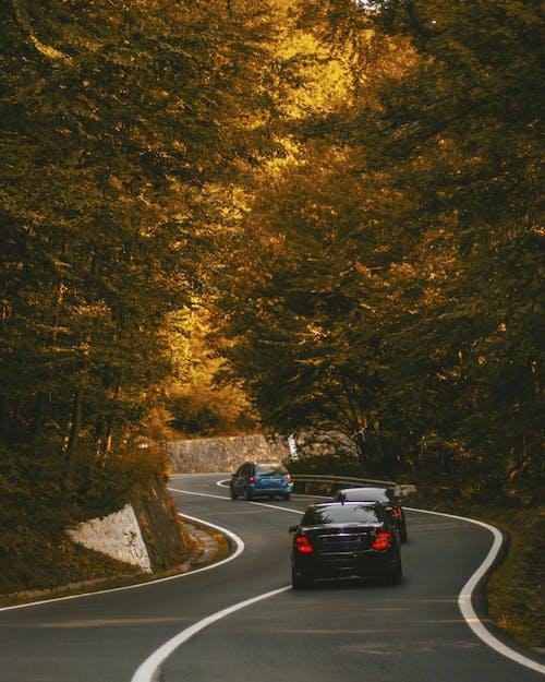 Black Car on Road Between Trees