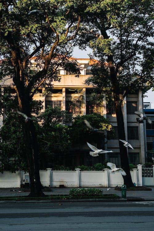 Ilmainen kuvapankkikuva tunnisteilla arkkitehtuuri, hotelli, ihmiset, katu