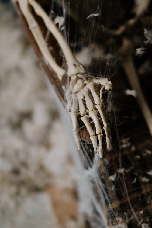 Skeleton Hand Covered in Spider Web