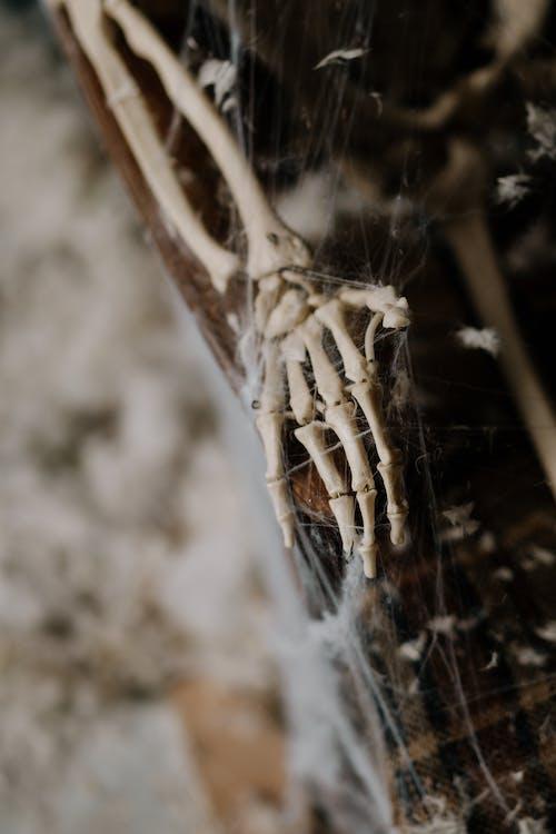 Skeleton Hand Covered in Spider Web