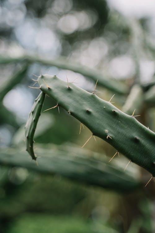 Kostenloses Stock Foto zu baum, blatt, blume, cactuses