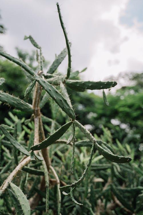 Kostnadsfri bild av blad, bondgård, botanisk trädgård, botaniska
