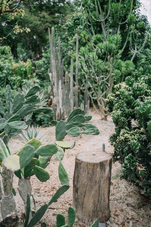 Foto profissional grátis de #verde, agricultura, ao ar livre, árvore