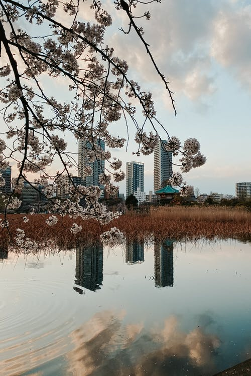 View from Shinobazu Pond