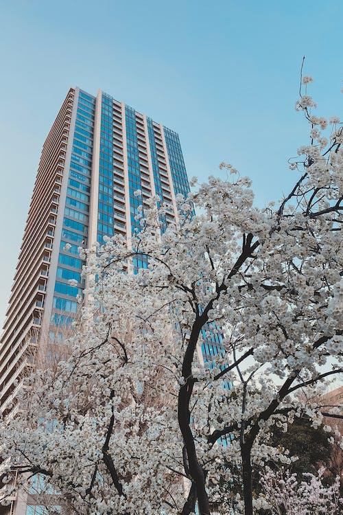 Foto profissional grátis de ângulo baixo, arquitetura, arranha-céu