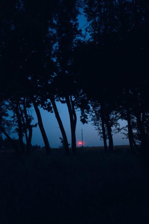 Trees growing under evening dark sky