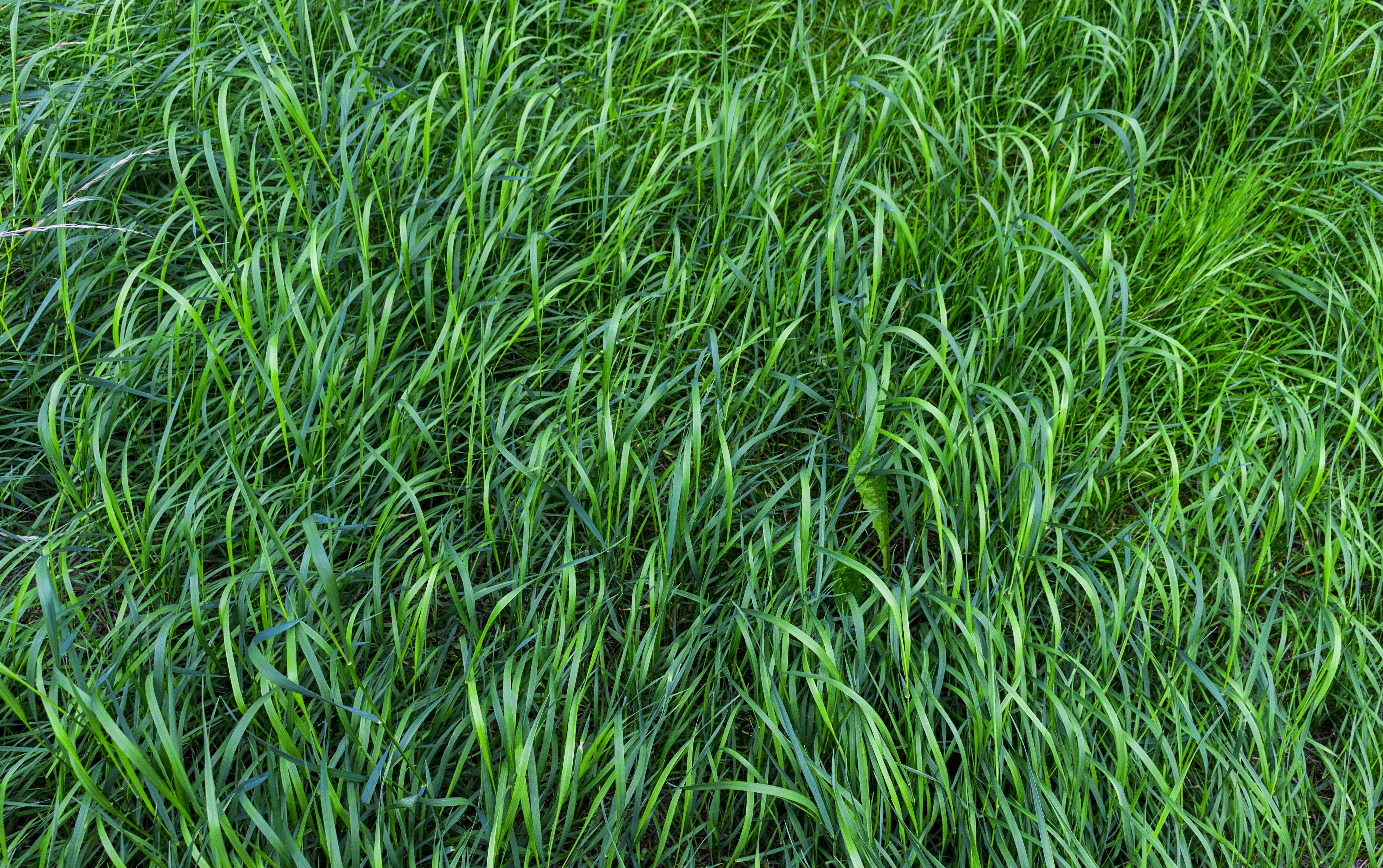 Shallow Focus Photo of Green Grass Field