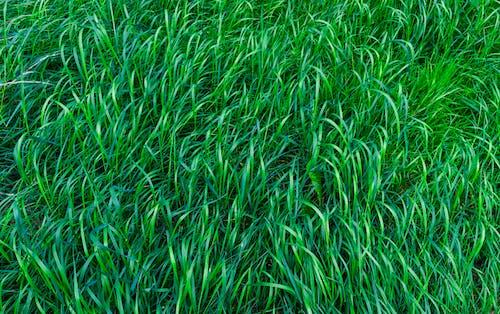 Бесплатное стоковое фото с длинный, заводы, зеленый, окружающая среда