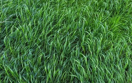 Free stock photo of nature, field, pattern, agriculture