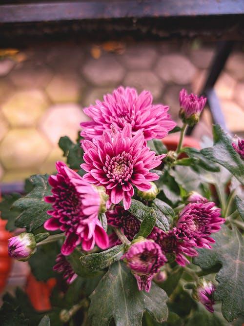 Blooming flowers with delicate pink petals in garden