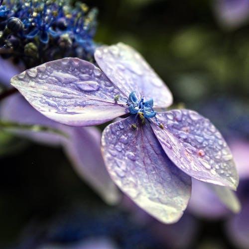 Free stock photo of flower, raindrops