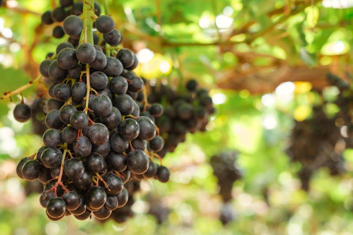 Uvas cepas vino