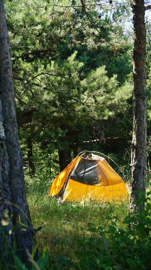 Foto profissional grátis de acampamento, amarelo, árvores, barraca