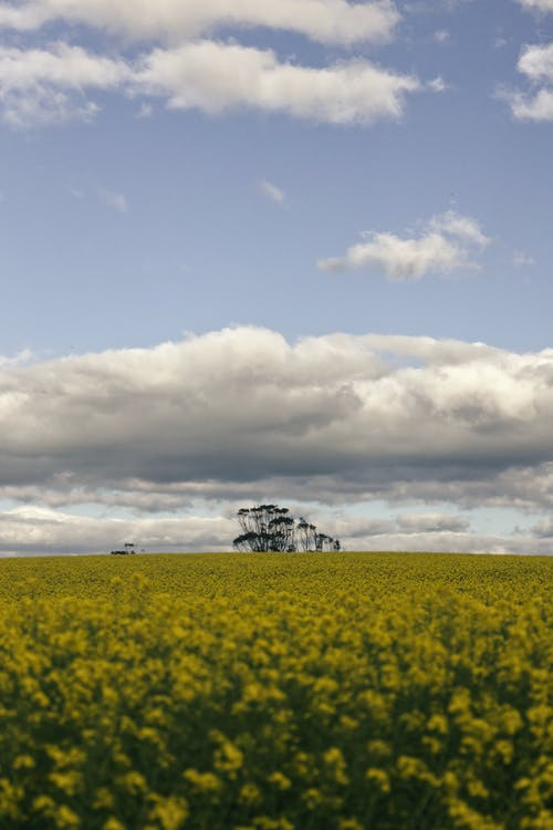 Photos gratuites de agriculture, arbre, brillant, campagne