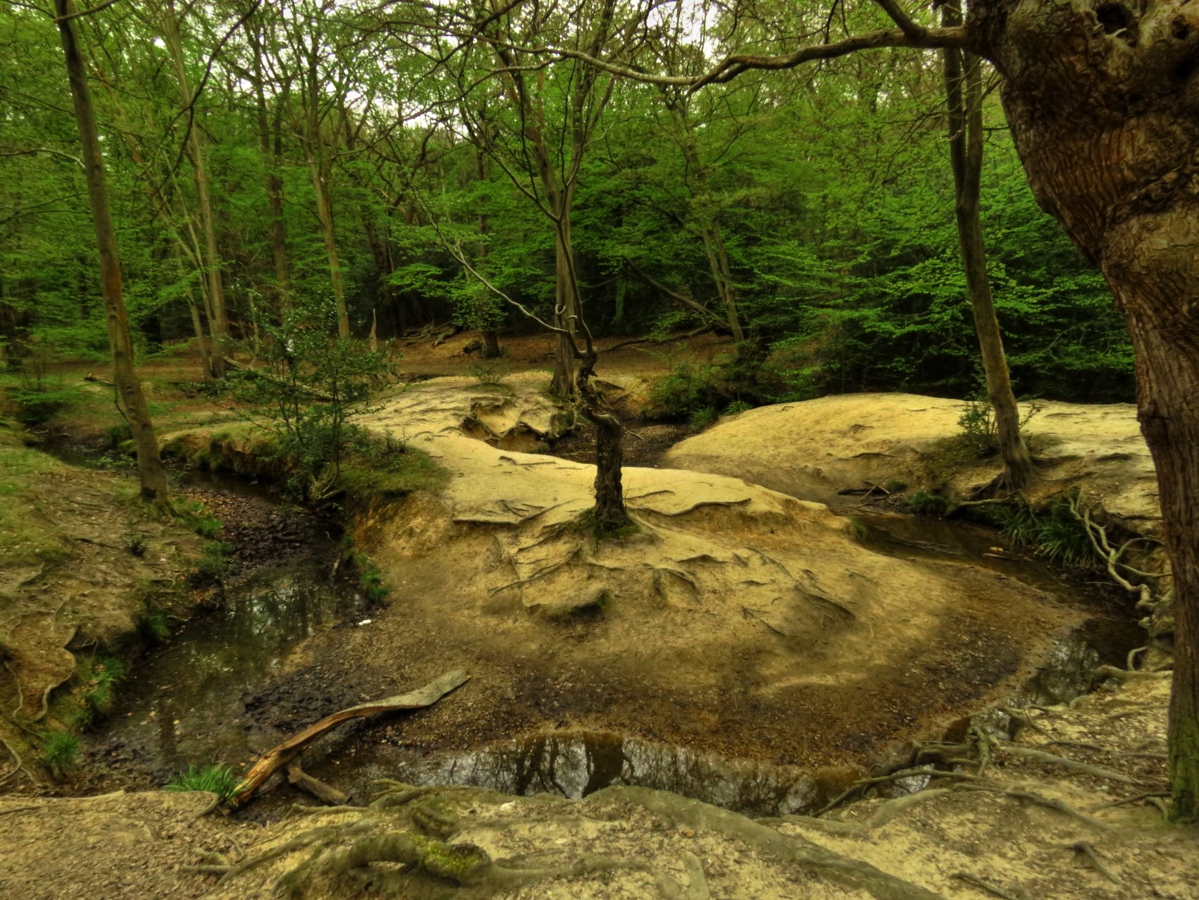 Free stock photo of green, meander, river, sand