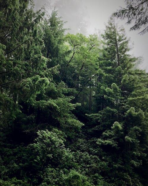 Darmowe zdjęcie z galerii z drzewo, mgła, mglisty