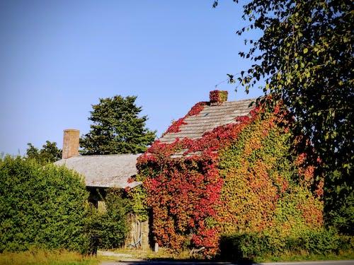 Immagine gratuita di autunno, cadere, cariato, colori autunnali