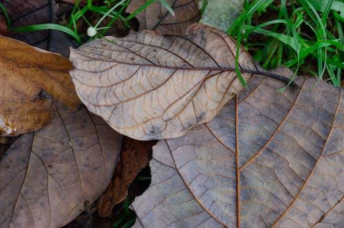 Fotos de stock gratuitas de césped, follaje, hierba, hojas secas