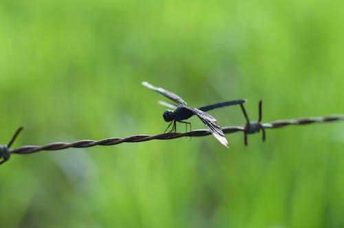Základová fotografie zdarma na téma detail, drát, hmyz, křídla